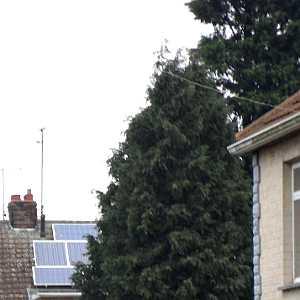 solar panel shading from tall Leylandii trees